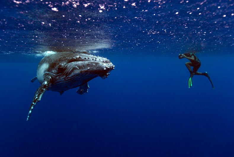 Swimmer with whale